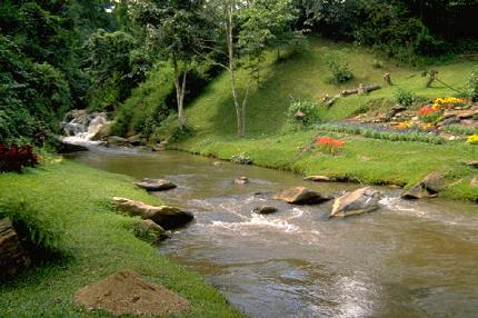 A stream surrounded by green grass.